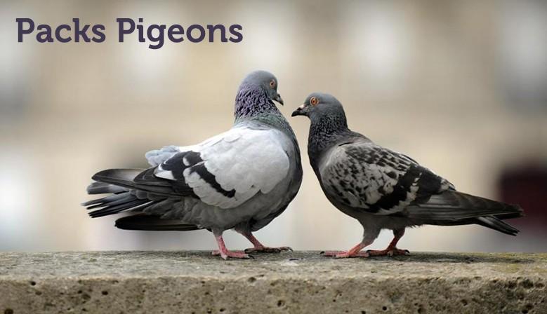Packs Pigeons